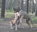 Ева Храбрый и Нежный лев 11 лет