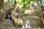 собаки на сене 2