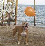 на море с шариком