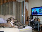 смотрим  TV