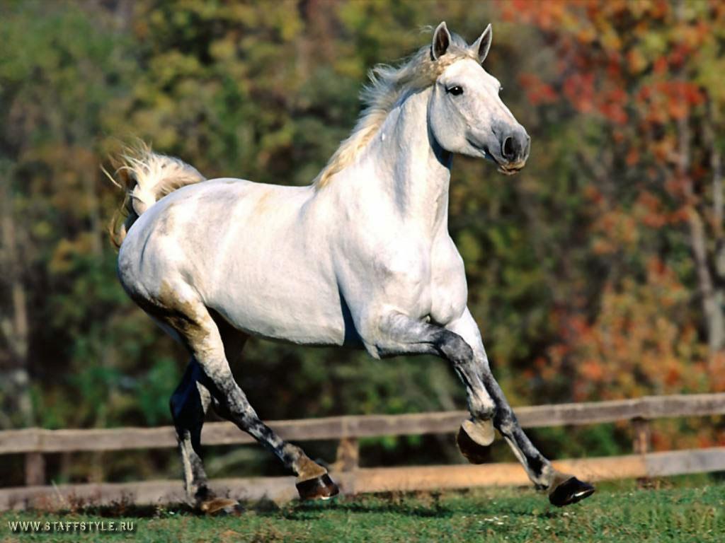 Пара лошадей - обои для рабочего стола. | 768x1024