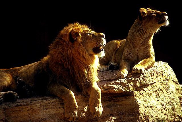 как льву помирится со скорпионом термобелье